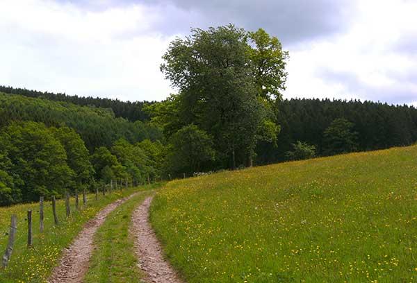Wanderurlaub vom feinsten im schönen Sauerland
